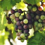 Winzer-Business: Idee Genuss-Scheine auf Wein