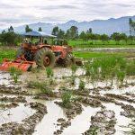 Bericht aus Indien: Unterstützung für kleine Farmer