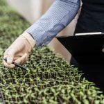Liegt die Zukunft der Landwirtschaft in der Stadt?