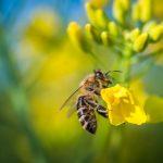 Wege gegen das Bienensterben