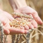 Das weltweite Ernährungssystem: Wie Nachhaltigkeit uns vor dem Supergau bewahren könnte