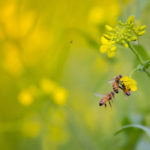 Landwirtschaft stellt Eckpunkte für mehr Artenschutz auf