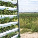 Landwirtschaft ohne Boden – ein Hof macht´s vor