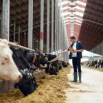 Glückliche Kühe – ein Garten im Stall