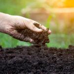 Ist Bio-Landwirtschaft schädlich für das Klima?