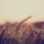 Steht die konventionelle Landwirtschaft vor dem Aus?
