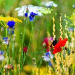 Artenschutz und konventionelle Landwirtschaft in einem – so funktioniert´s
