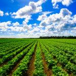 embauerment: Plattform für nachhaltige Landwirtschaft