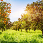 Obstbäume mit künstlicher Intelligenz schneiden lassen