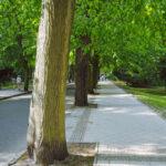 Aufmerksamkeit für Straßenbäume mit PLANTObelly